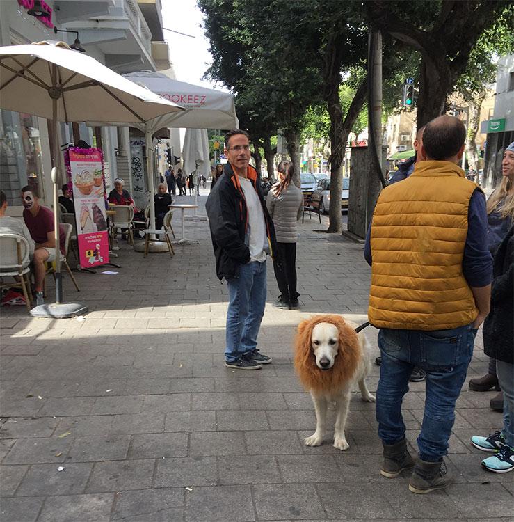 Cachorro fantasiado pro Carnaval